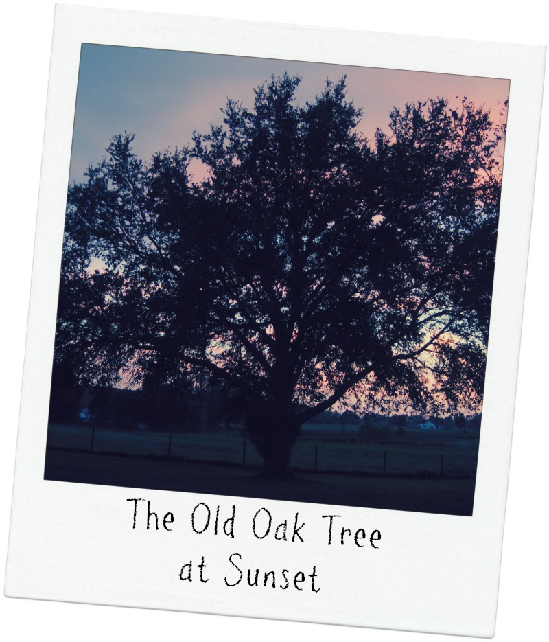 The Oak Tree on the Farm